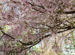 The Friends of The Frelinghuysen Arboretum