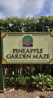 Pineapple Garden Maze