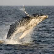 Suprise Whale Encounter