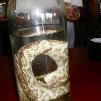 Snake in bottle of Tequila