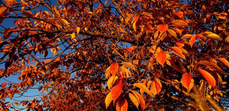 fall at horseshoe lake