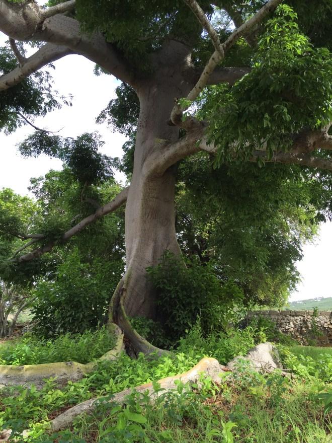 The mighty tree