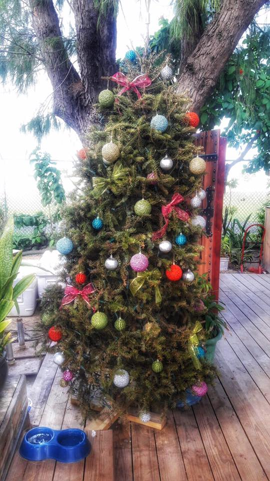 island christmas traditions