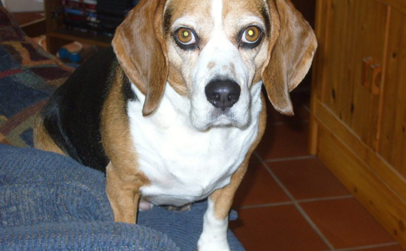 And finally, how my late beagle Flea helped break down barriers in Germany…