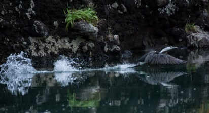 2016 04 08 Sail Day 10 Dinghy Wairakau Stream-16