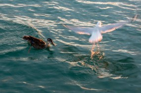 2016 04 11 Sail Nt 13 Anchorage Opunga Cove-110