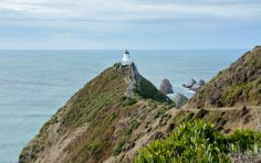 2016 04 24 Nugget Point (104)