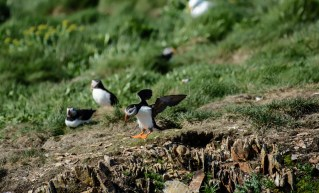 puffins-and-root-cellars-14-of-32