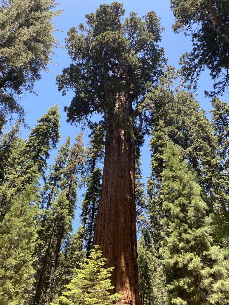 General Sherman Tree in Sequoia National Park in the summer