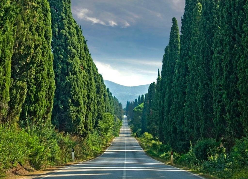 Strada-del-vino-Bolgheri