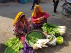 Colorful Rajasthani Ladies!