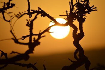 Sunrise! PC - Vaibhav Chikhle