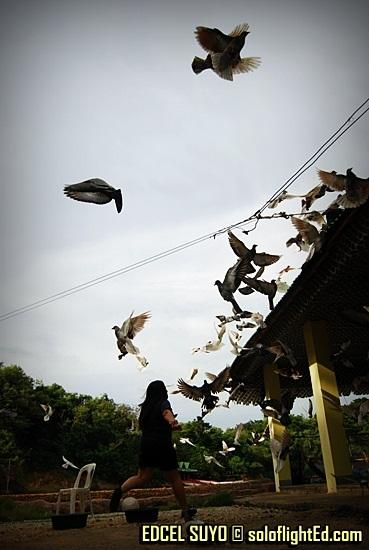 Villa Igan's doves