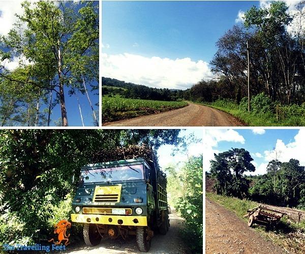 road going to Lake Apo in Valencia Bukidnon
