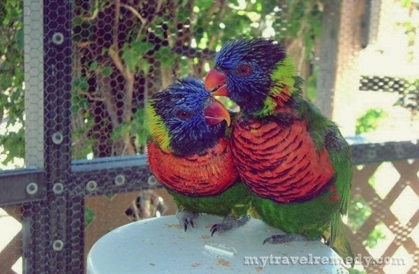 animal encounters at florida