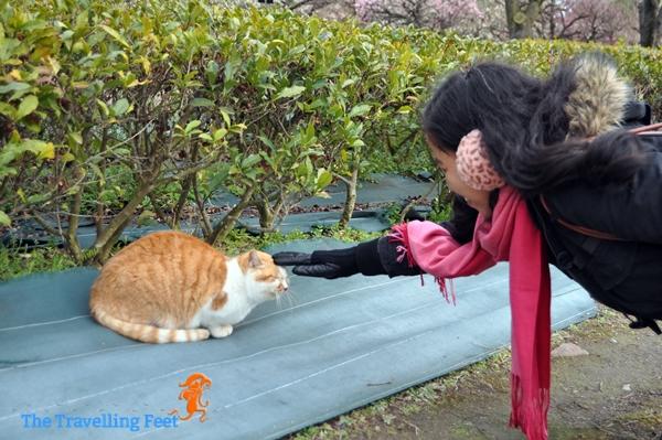 cat in osaka