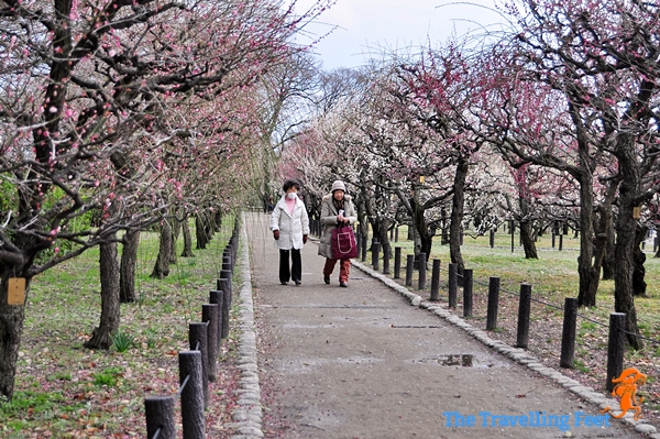 two japanese lady walking at the Plum Grove Garden in Osaka
