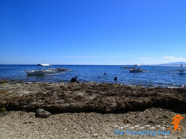 Apo Island seascape