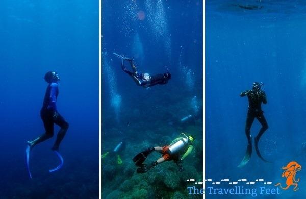 freediving at apo island