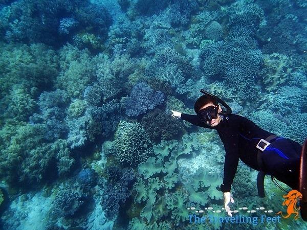 spotting a sea turtle