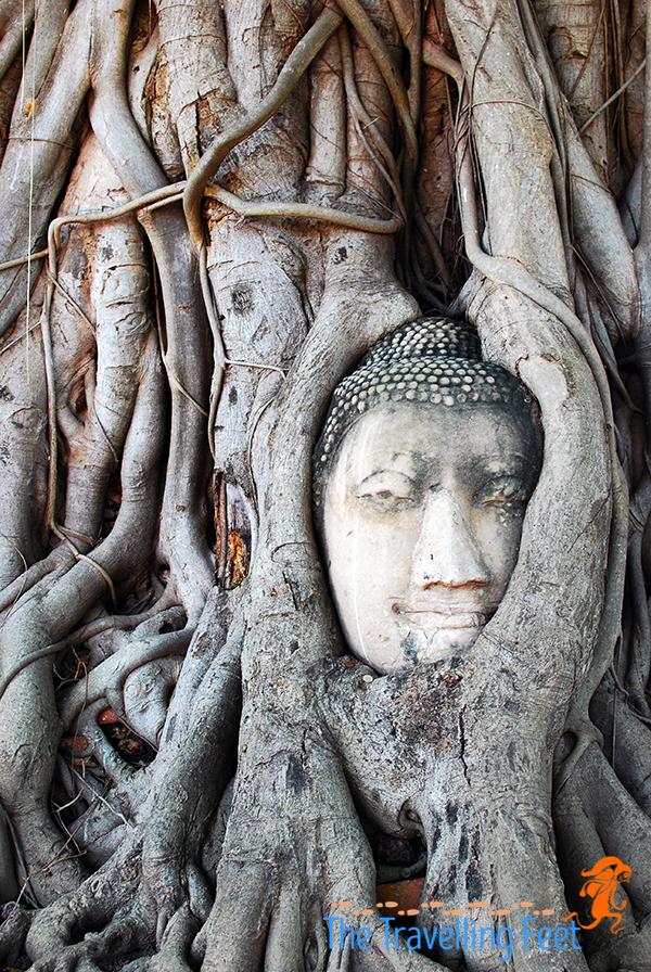 buddha head at wat mahathat in Ayuthaya