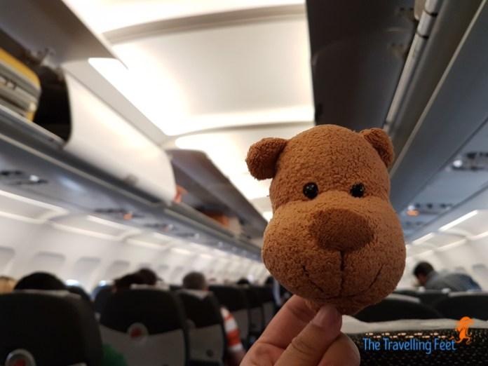 magnet the bear