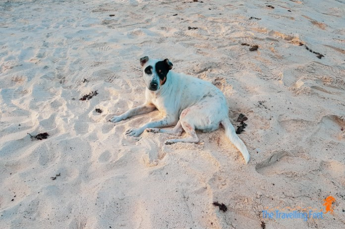 a dog chilling at Dahican Beach