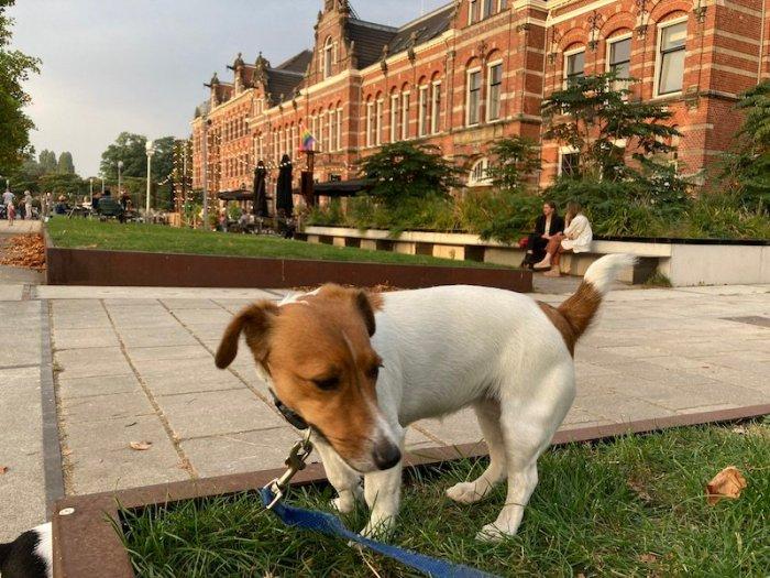 cane di fronte al Conscious Hotel Westerpark