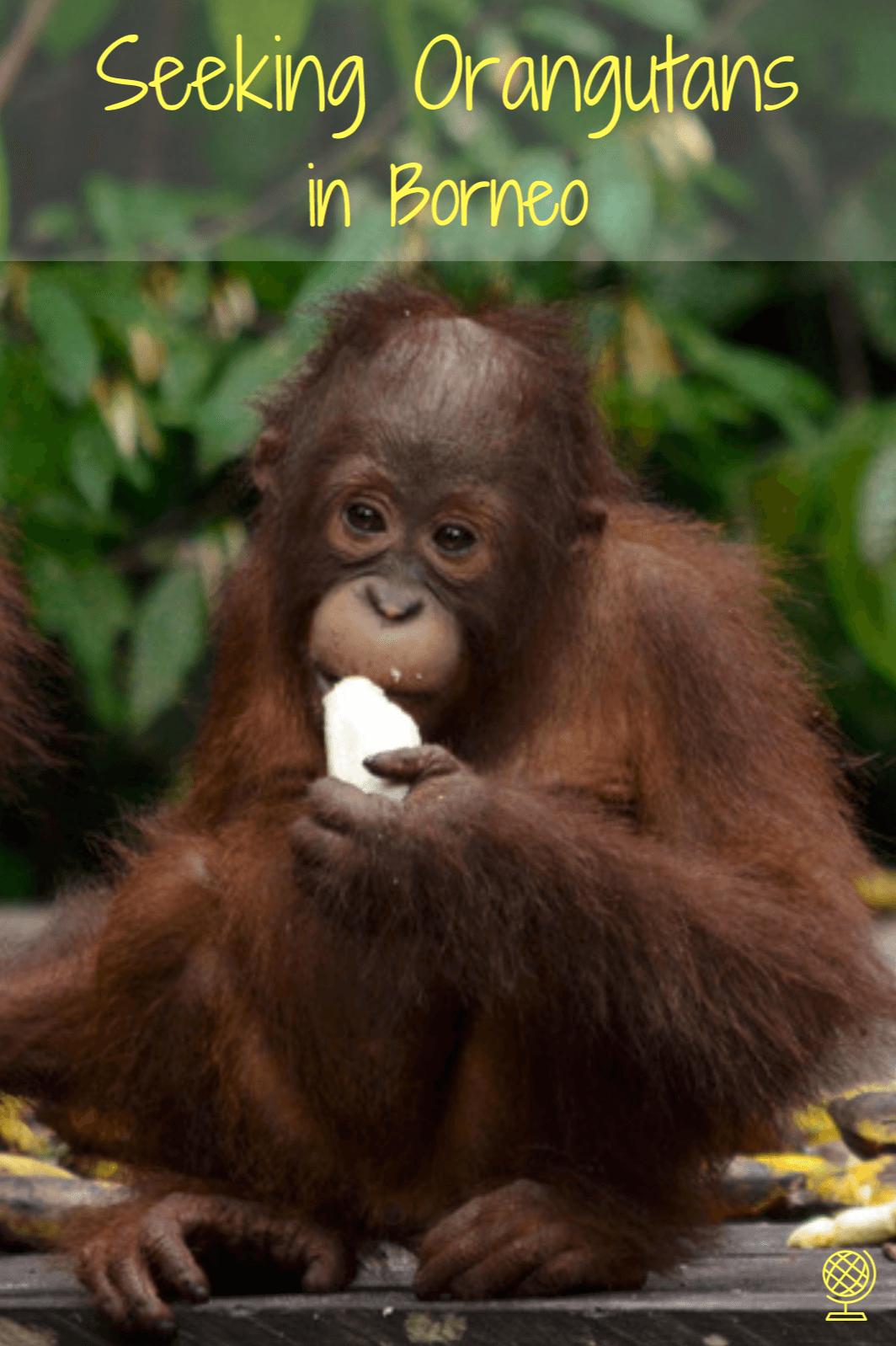Forum on this topic: When an Orangutan Spots a Mom-to-Bes Bump , when-an-orangutan-spots-a-mom-to-bes-bump/
