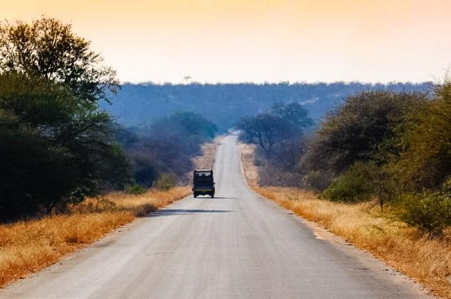 Safari in Kruger National Park - Sunset drive