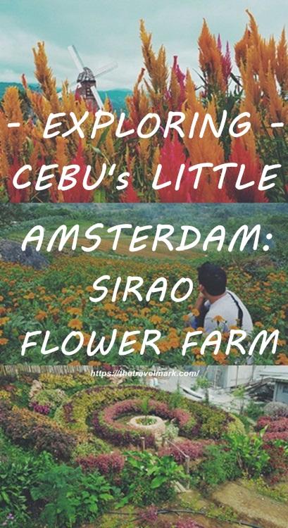 Exploring Cebu's Little Amsterdam - A Sirao Flower Garden Travel Guide