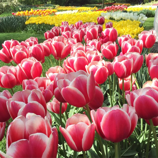 Keukenhof Garden | Lisse | The Netherlands