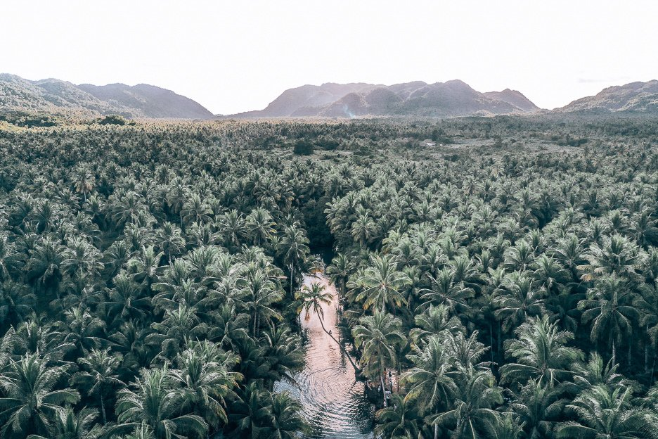 The view of a grove of palm trees over Massin River, Siargao