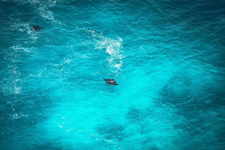 7 days Bali itinerary - manta rays
