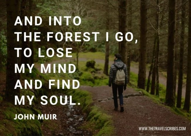 Quotes about hiking in woods