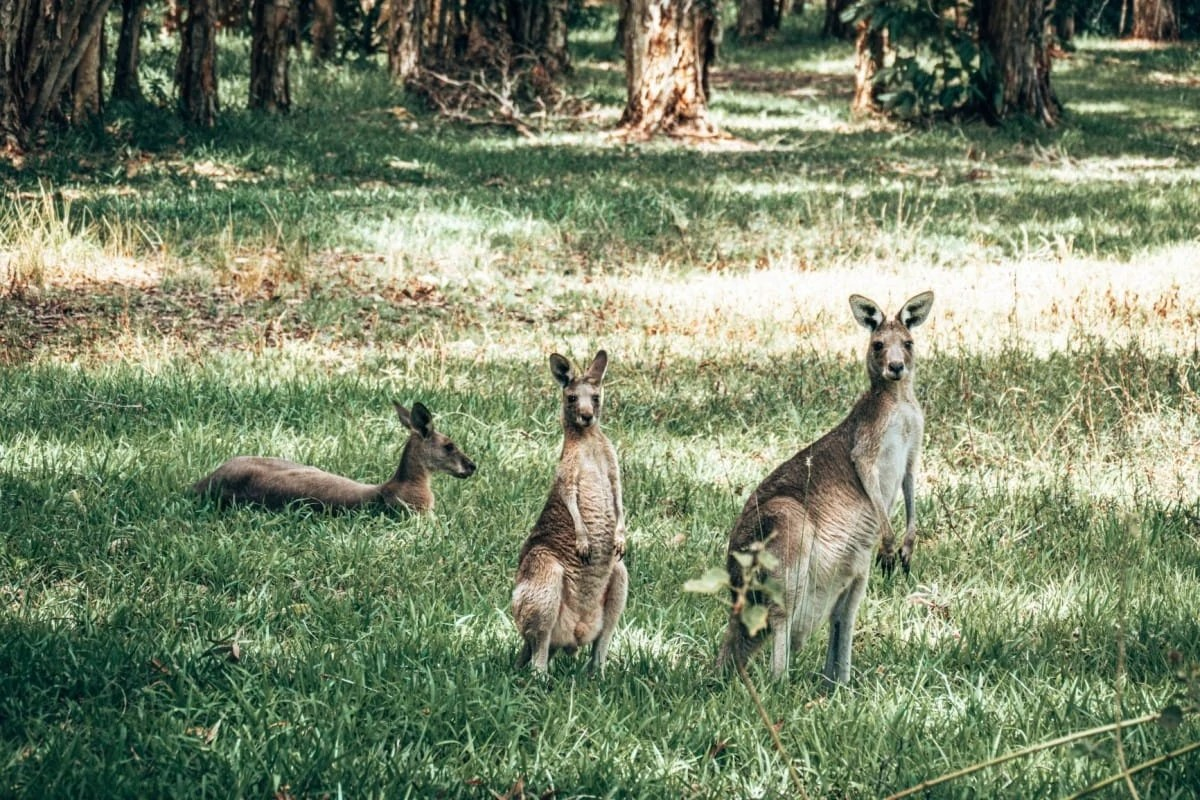 Books about wanderlust - Australia