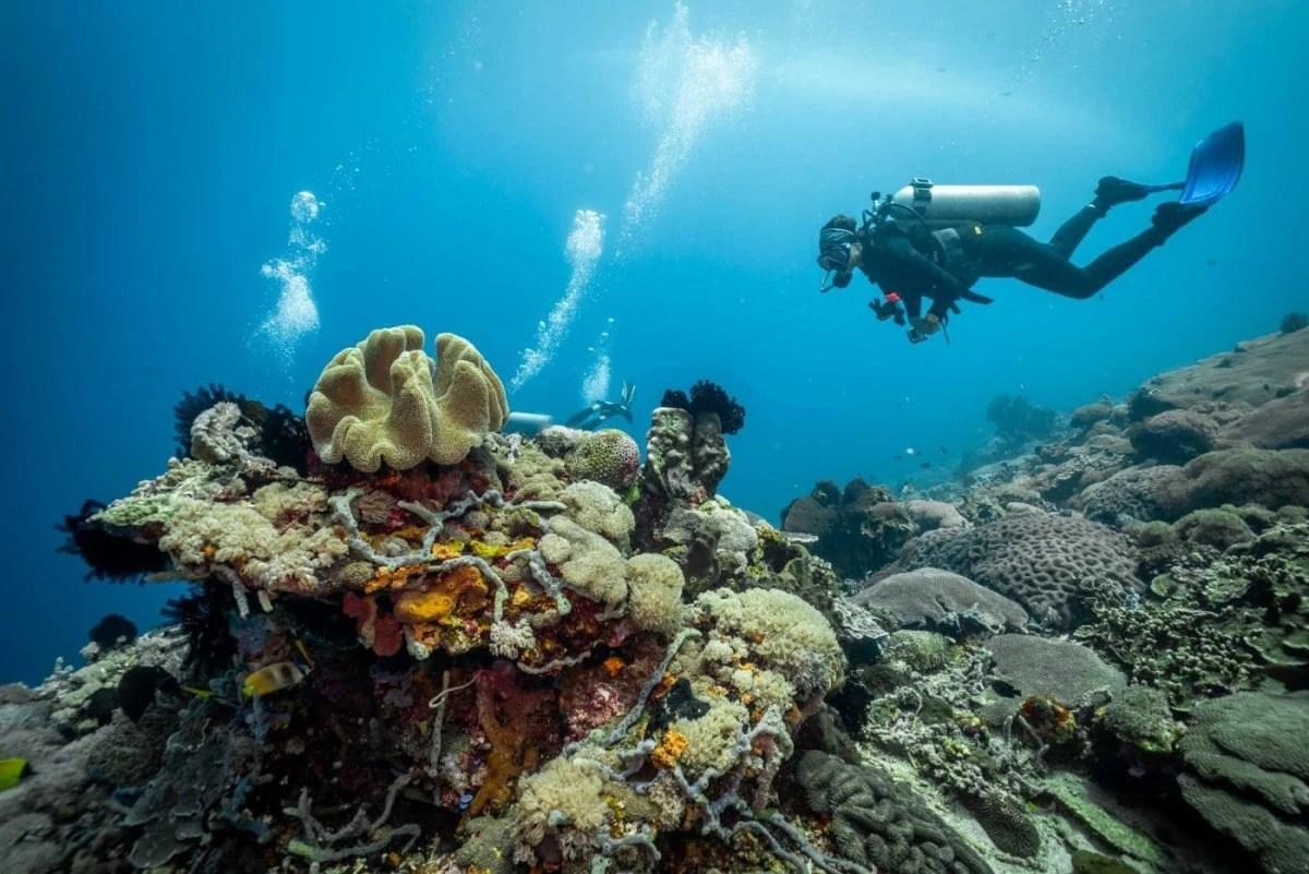 Bali Hidden Gems Bali Nusa Penida diving