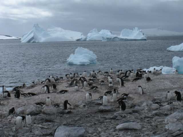 Antarctica7