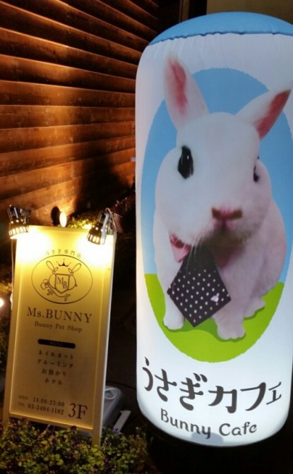 rabbit cafe japan