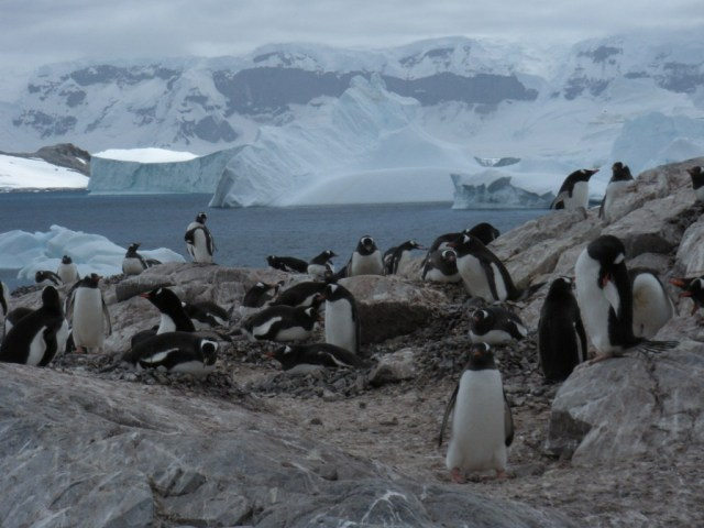 tourist attractions in antarctica