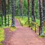 Estonia: A Modern Country for Nature Lovers