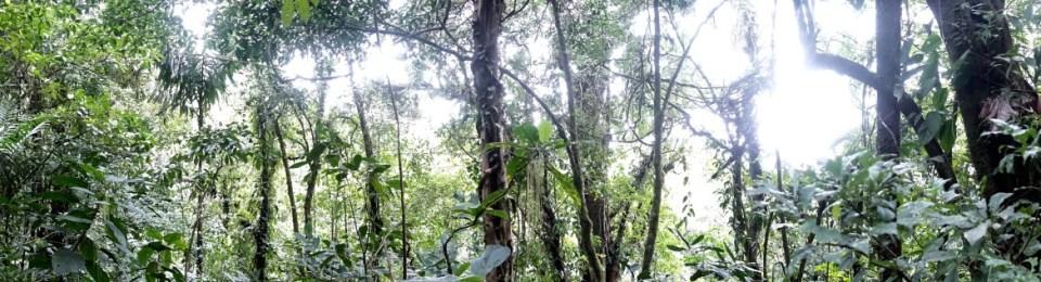 COSTA RICA: San José, Finca Luna Nueva, Lake Arenal