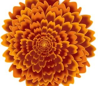 marigold-dark-1.jpg