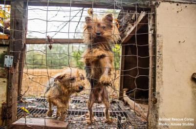 puppy mills rescue animal rescue corps