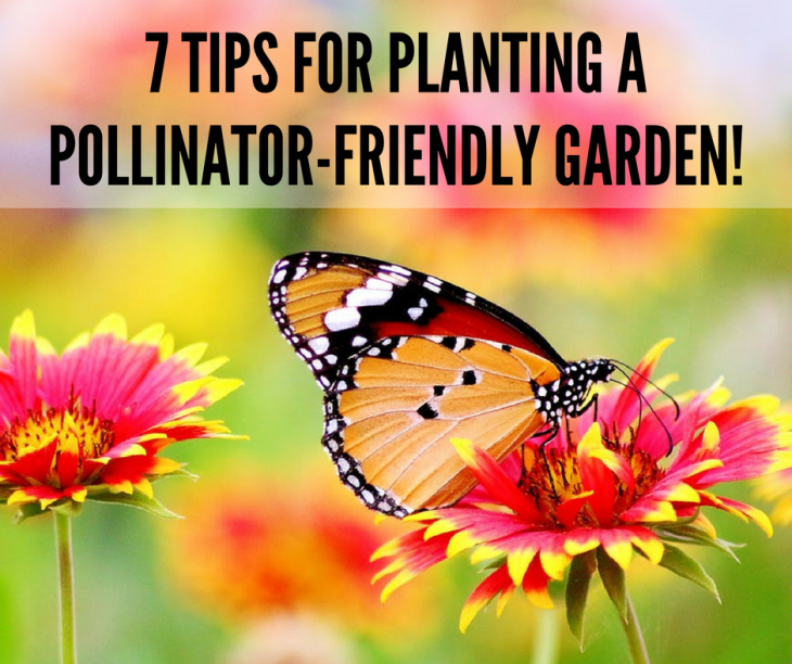 7 TIPS FOR PLANTING A POLLINATOR-FRIENDLY GARDEN!