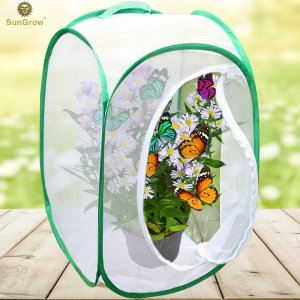 enclosure for raising monarch butterflies