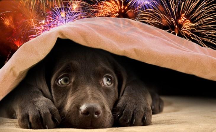 puppy-scared-fireworks