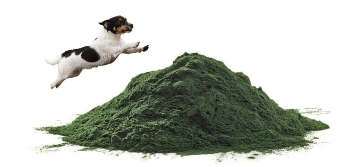 dogs spirulina organic