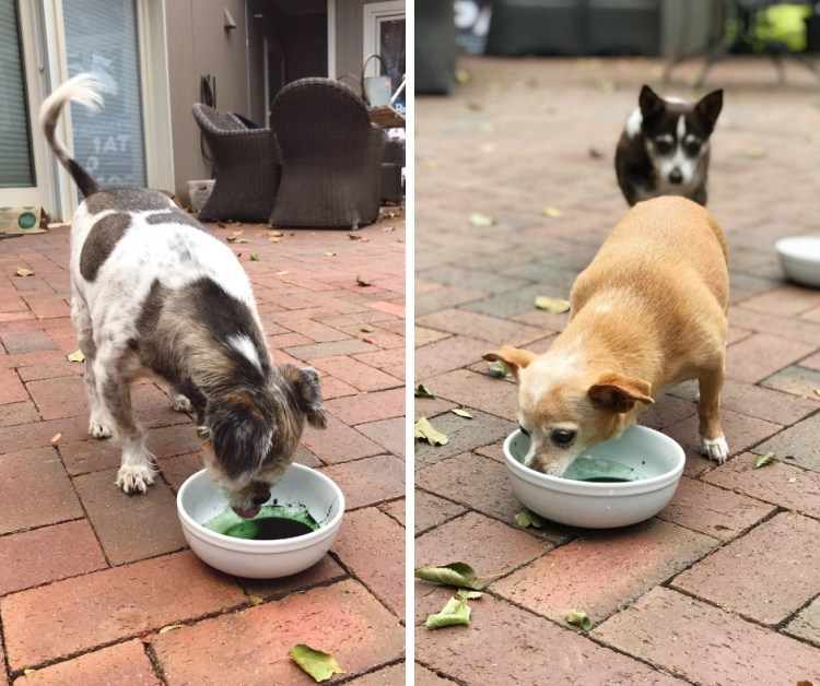 spirulina good for dogs organic idias