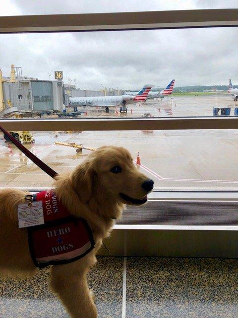 Service animal in vest preparing to travel
